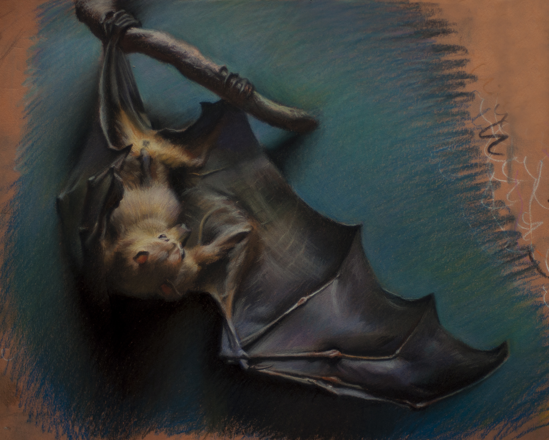 """Flying Fox"" 12x16"" pastel completed at the Field Museum Chicago"