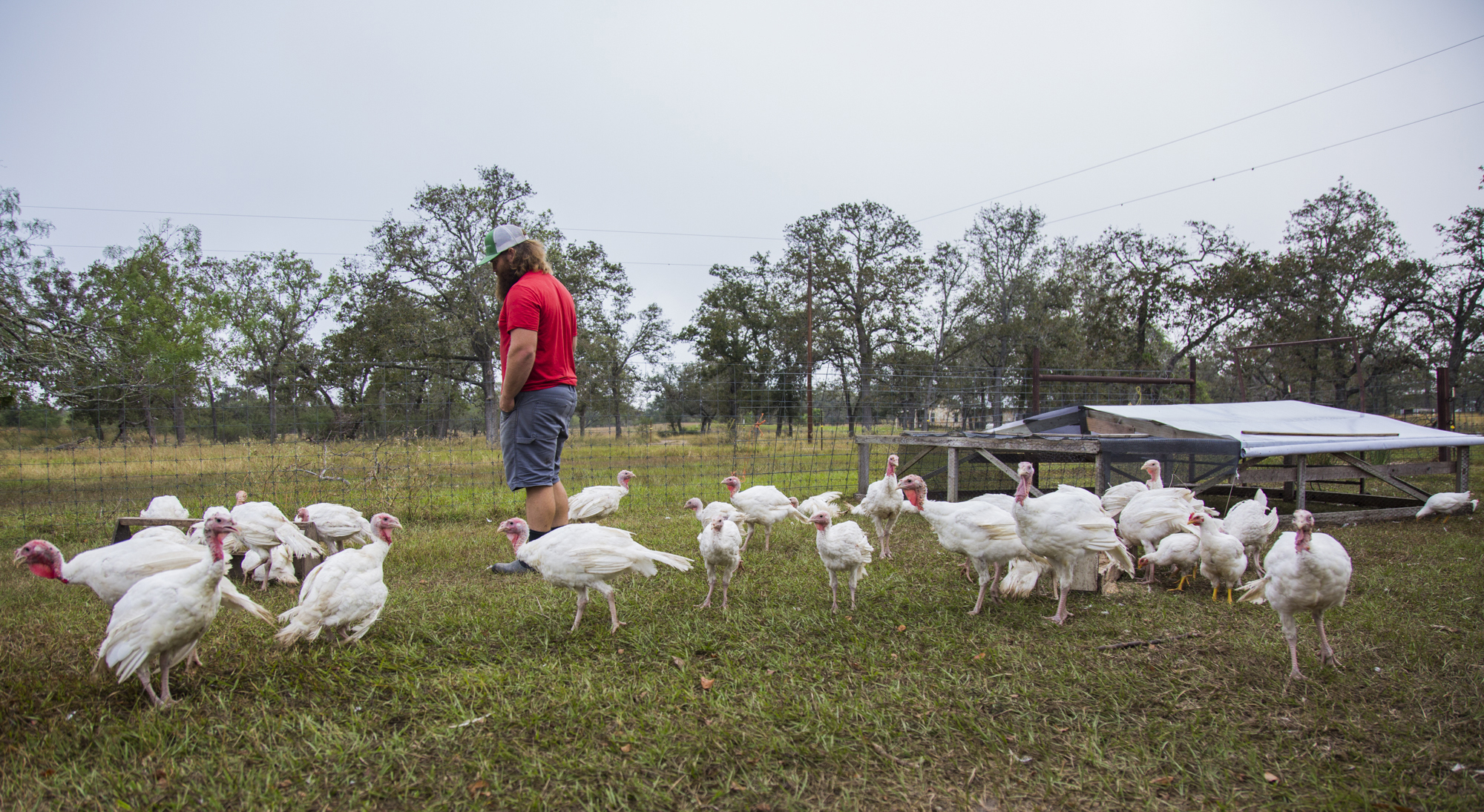 Keller checks on his flock of turkeys with a cup of coffee in hand a few weeks after letting them out to free range on his farm.