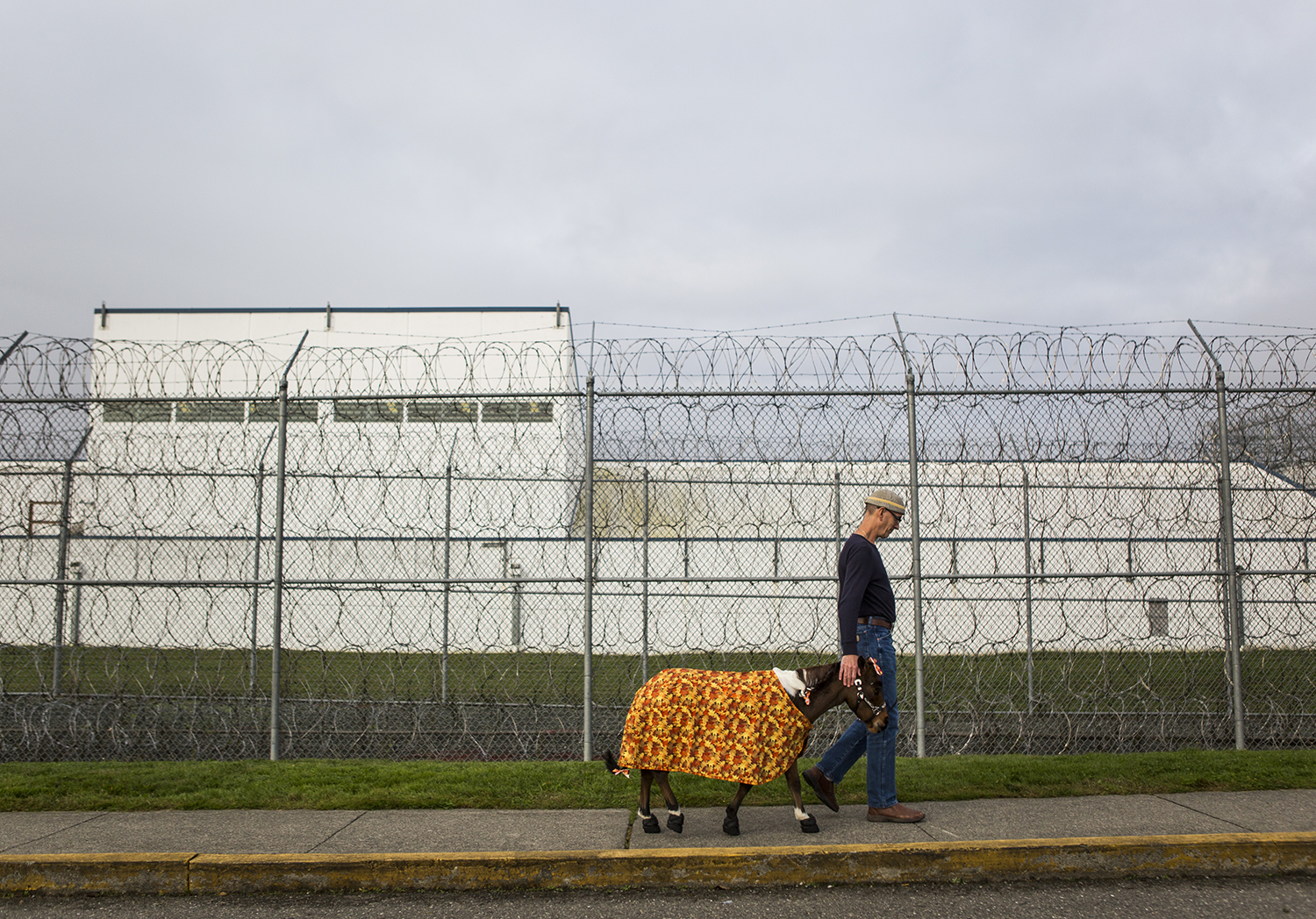 Triple B Foundation for Pet Therapy president Brian Hohstadt walks Streaker, the miniature pony, to the entrance of the Special Offenders Unit where he makes monthly visits to the inmates in the Monroe Correctional Complex on Tuesday, Oct. 30, 2018 in Monroe, Wa.