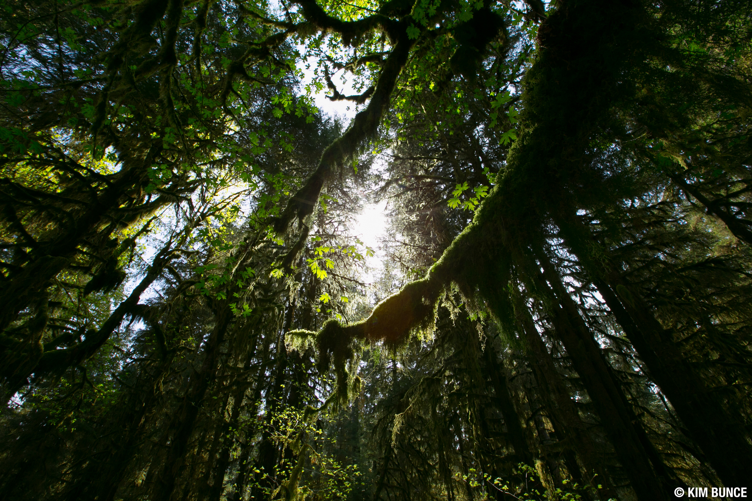 Olympic National Park - 2016