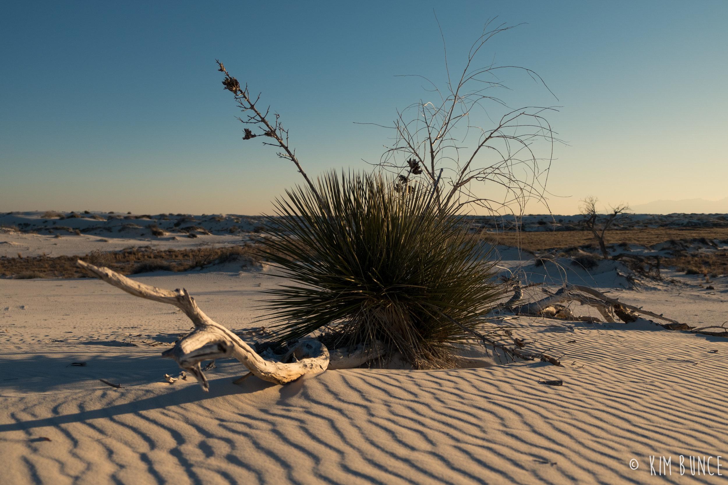 White Sands National Monument - 2017