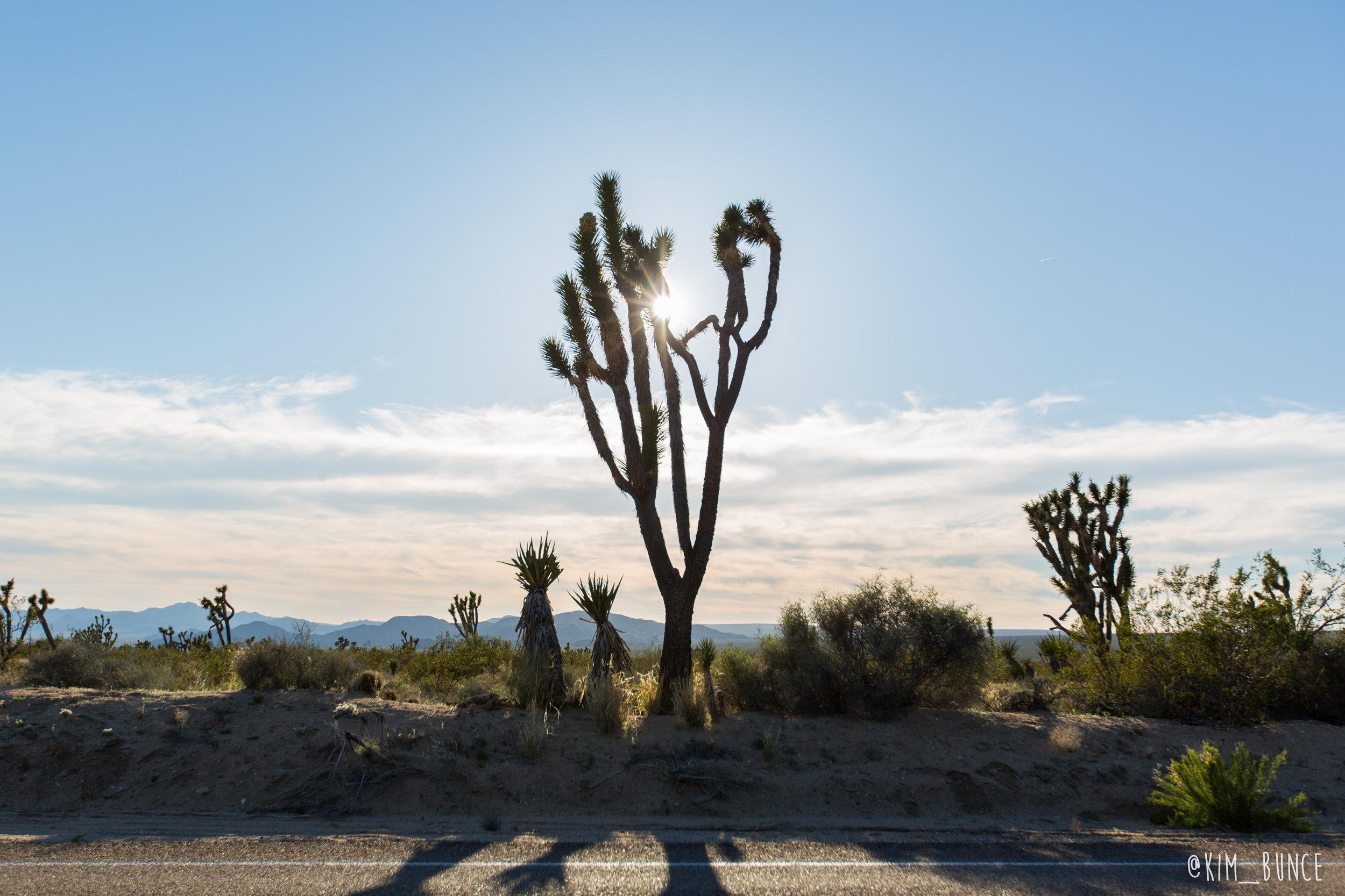 Mojave National Preserve - 2017
