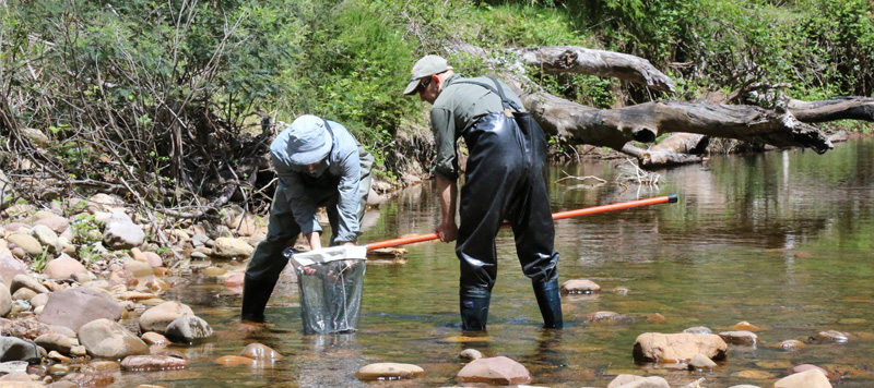Monitoring for freshwater vertebrates, Wonnangatta River, Alpine National Park.