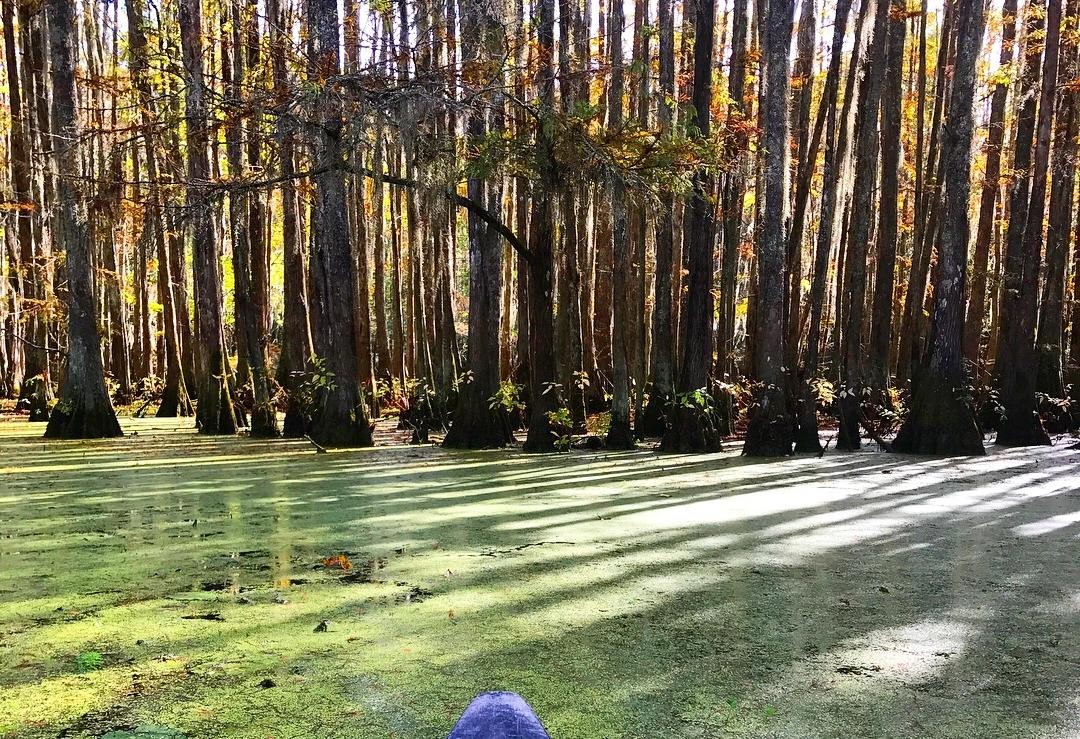 Canoe in the swamp.JPG