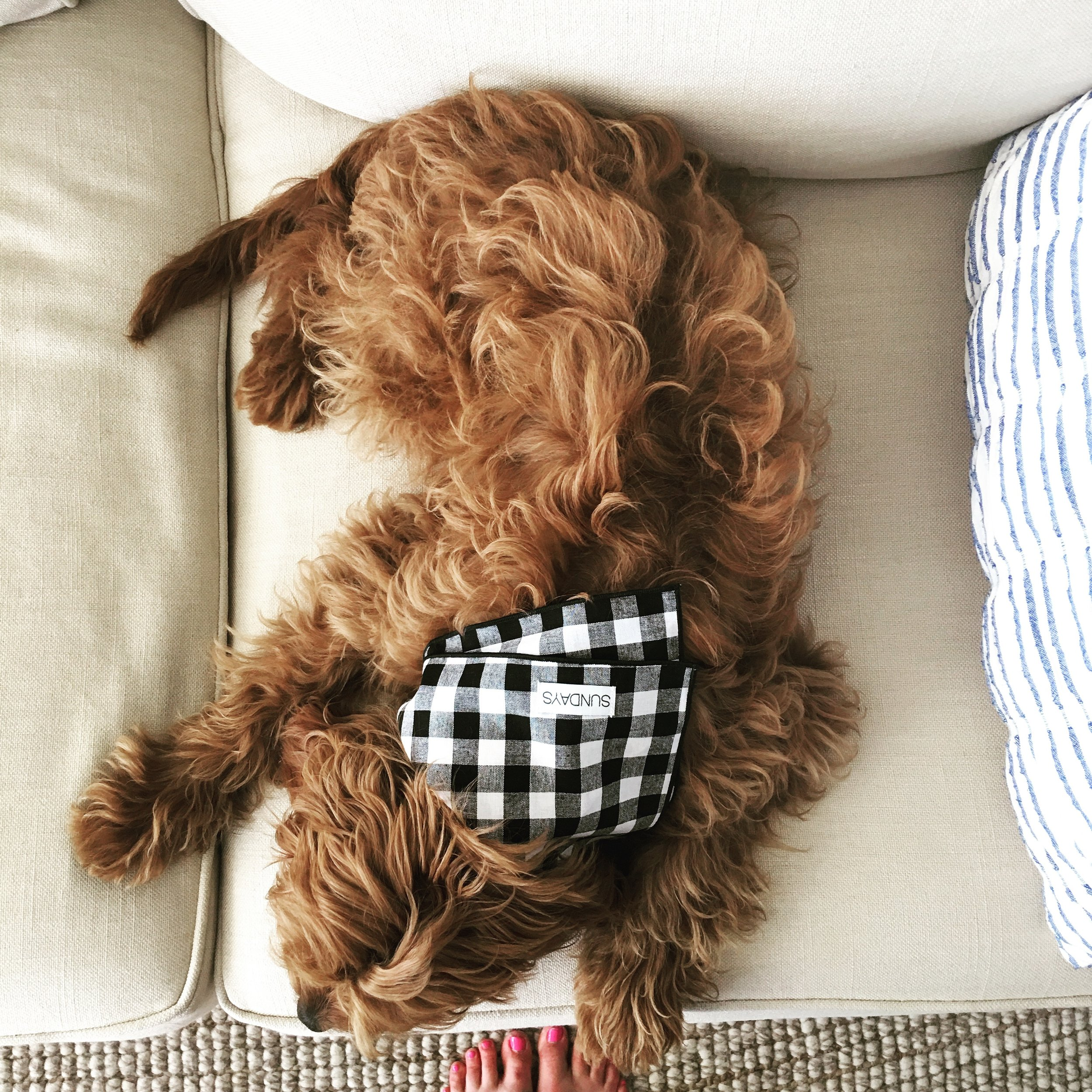 SUNDAYS dog bandana black gingham crosby couch.JPG