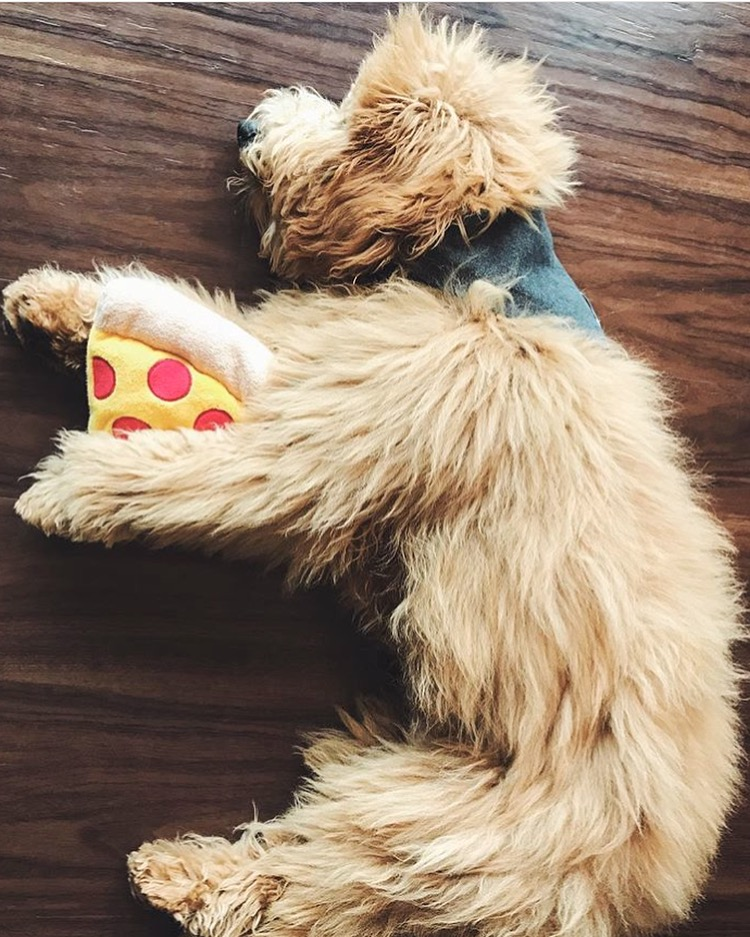 Dog_Bandana_Stars_Print_SUNDAYS_Labradoodle.JPG