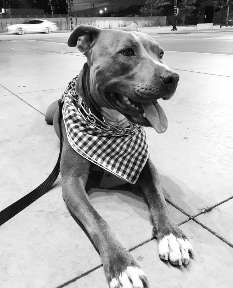 SUNDAYS Dog Bandana Gingham Gertie.jpg