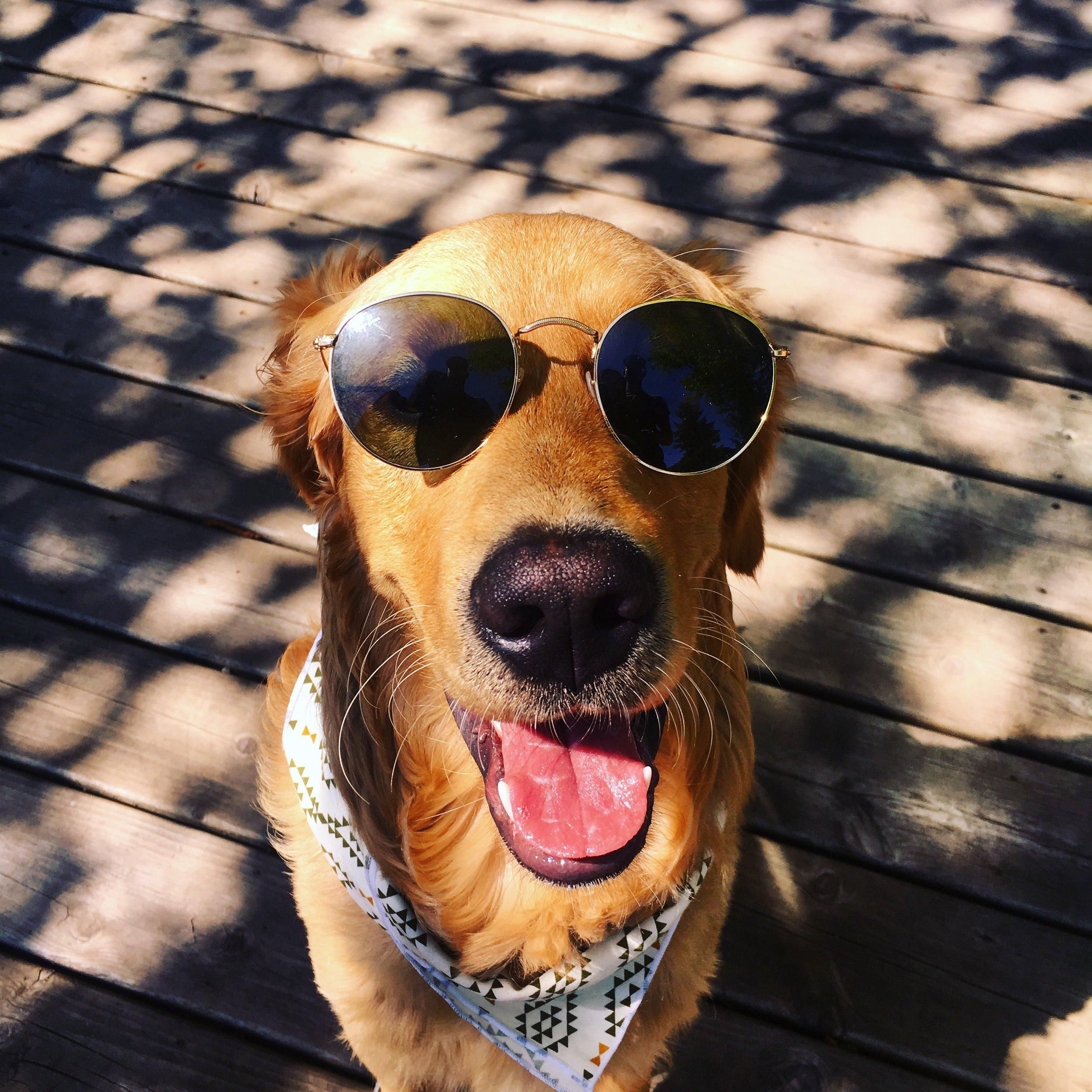 Dog_Bandana_White_Green_Aztec_Print_SUNDAYS_Sunglasses.JPG
