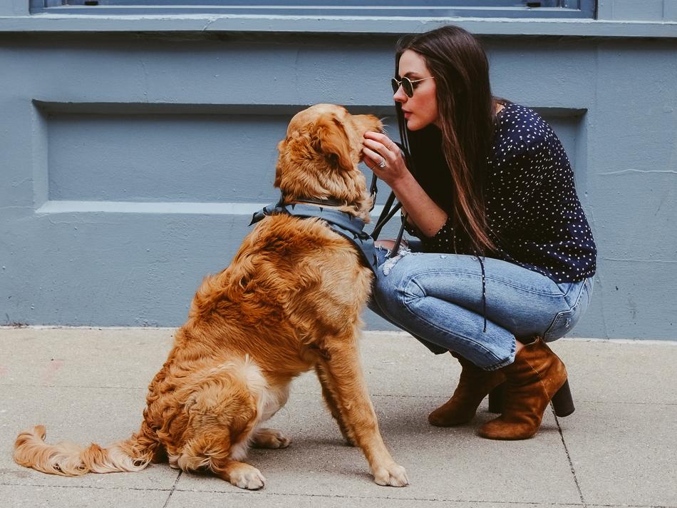 Dog bandana navy star print SUNDAYS-7309 (1).jpg