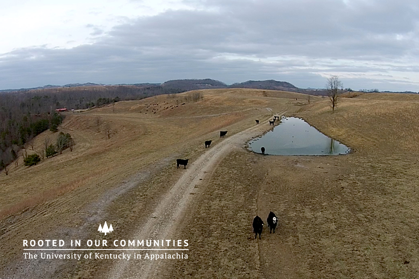 Heifer Development Project