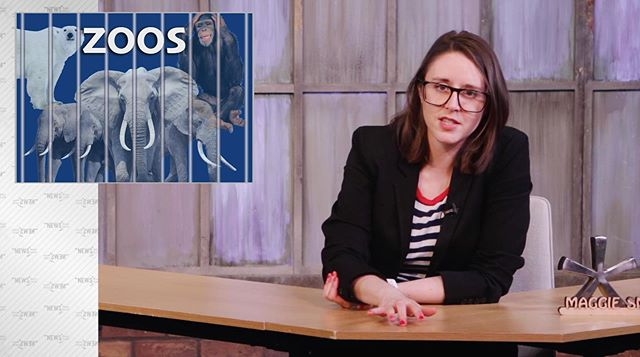 """The News* with Maggie Smith"" looks into the pros and cons of zoos 🐵 Full episode linked in bio! 👀 . . . . . #asterisk #thenewsasterisk #satiricalnews #satire #politics #femalecomedian #femalecomedywriters #chicagocomedy #chicagofilm #chicagofilmmaker #womenincomedy #politicalcomedy #latenight #chicagoimprov #animalrights #animalwelfare #zoo #peta #secondcity"