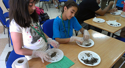 Students dissect owl pellets to find bones, fur and other undigestibles to determine what owls are eating.