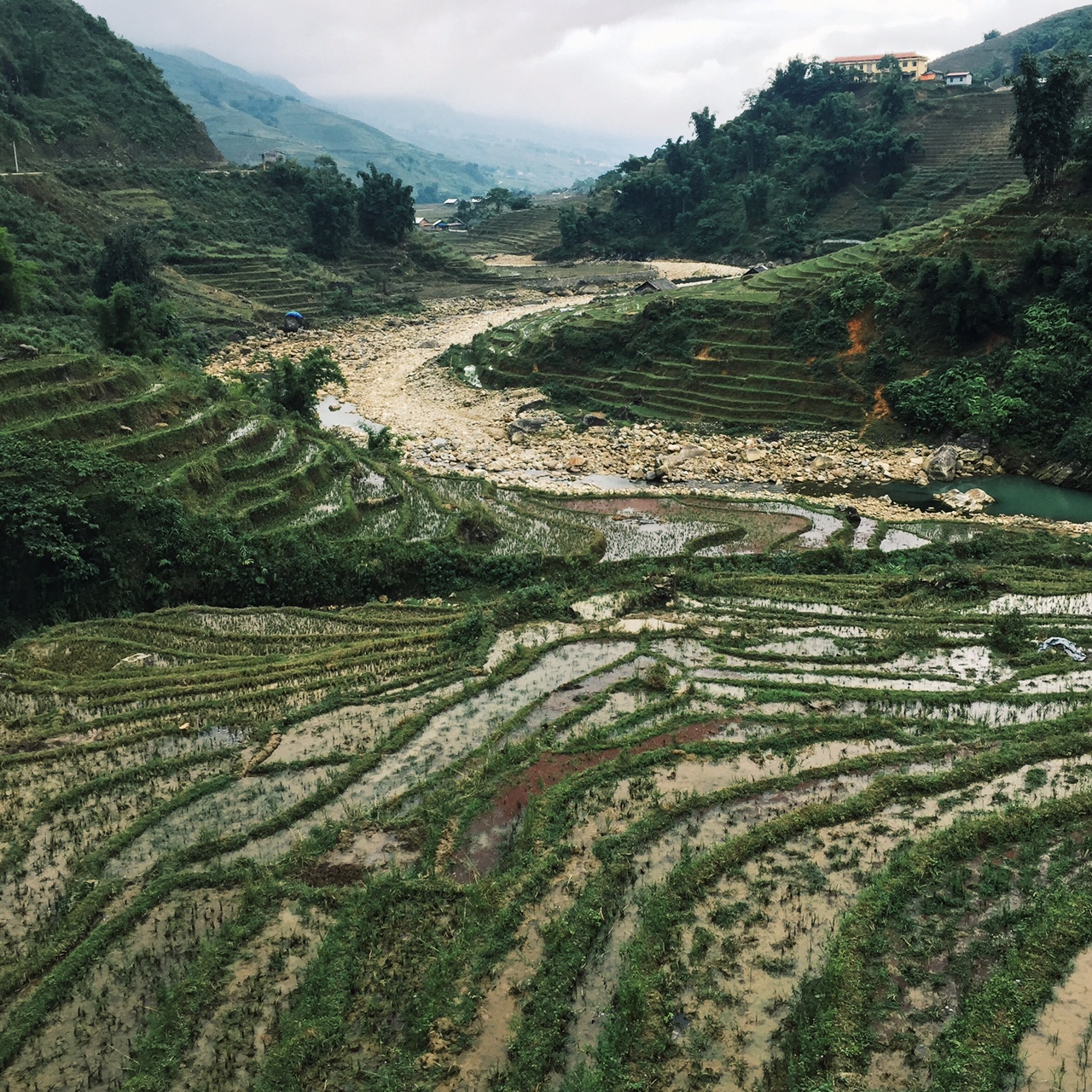 rice paddies1.JPG