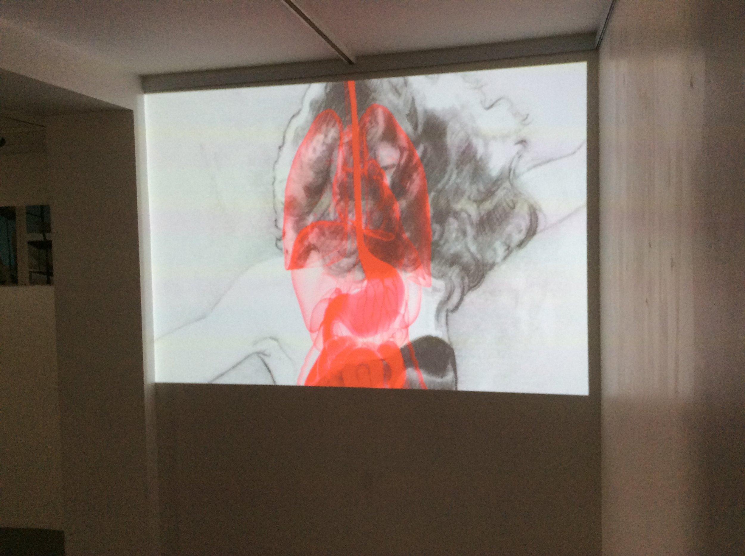 Sandra Krasker, video