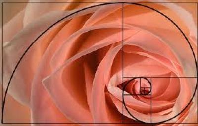 golden rose.jpg