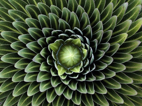 Image source unknown. Symmetry speaks through mathematics to produce a way we can understand nature in terms of frequency. Click to enlarge.