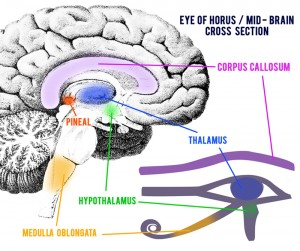 The Eye Of Horus from Ancient Egyptian glyphs is now seen as a representation of the Pineal gland of a human brain. Please do your own research on all of this, as you wish. The awareness and correlations are both stunning and obvious when you can see a bigger picture.