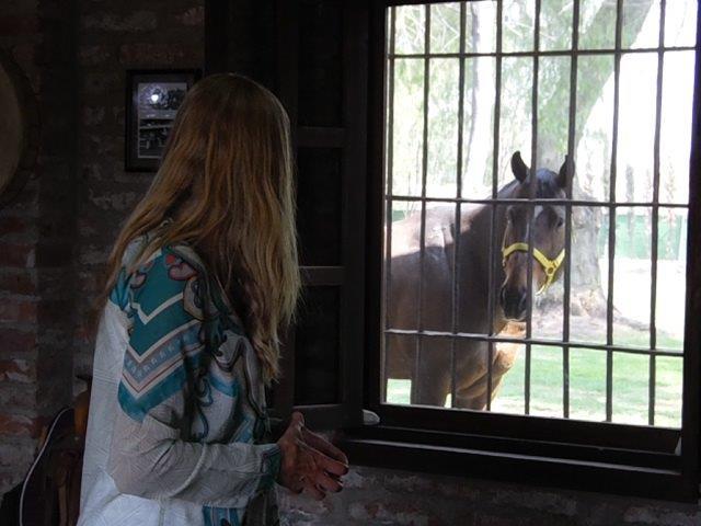 Holistic Horses