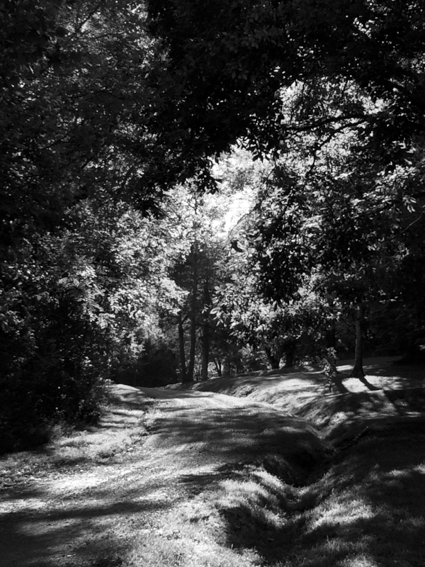 darienphotography_nashville