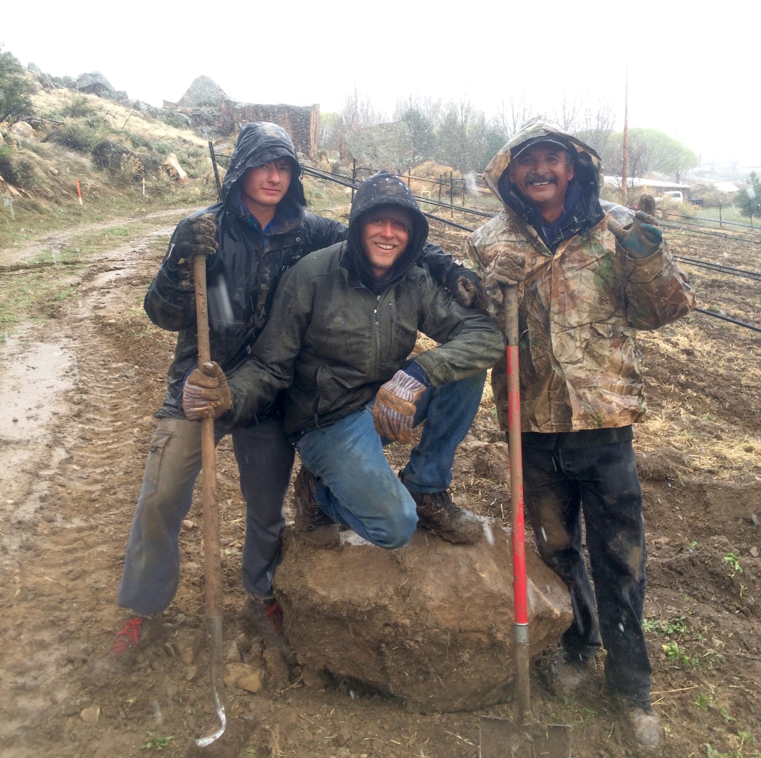 Jean Francois, Gus and Adolfo harvest rocks, one of just a few spring farm tasks that can still be done in the rain. Working with fruit trees while they're wet encourages the spread of disease.