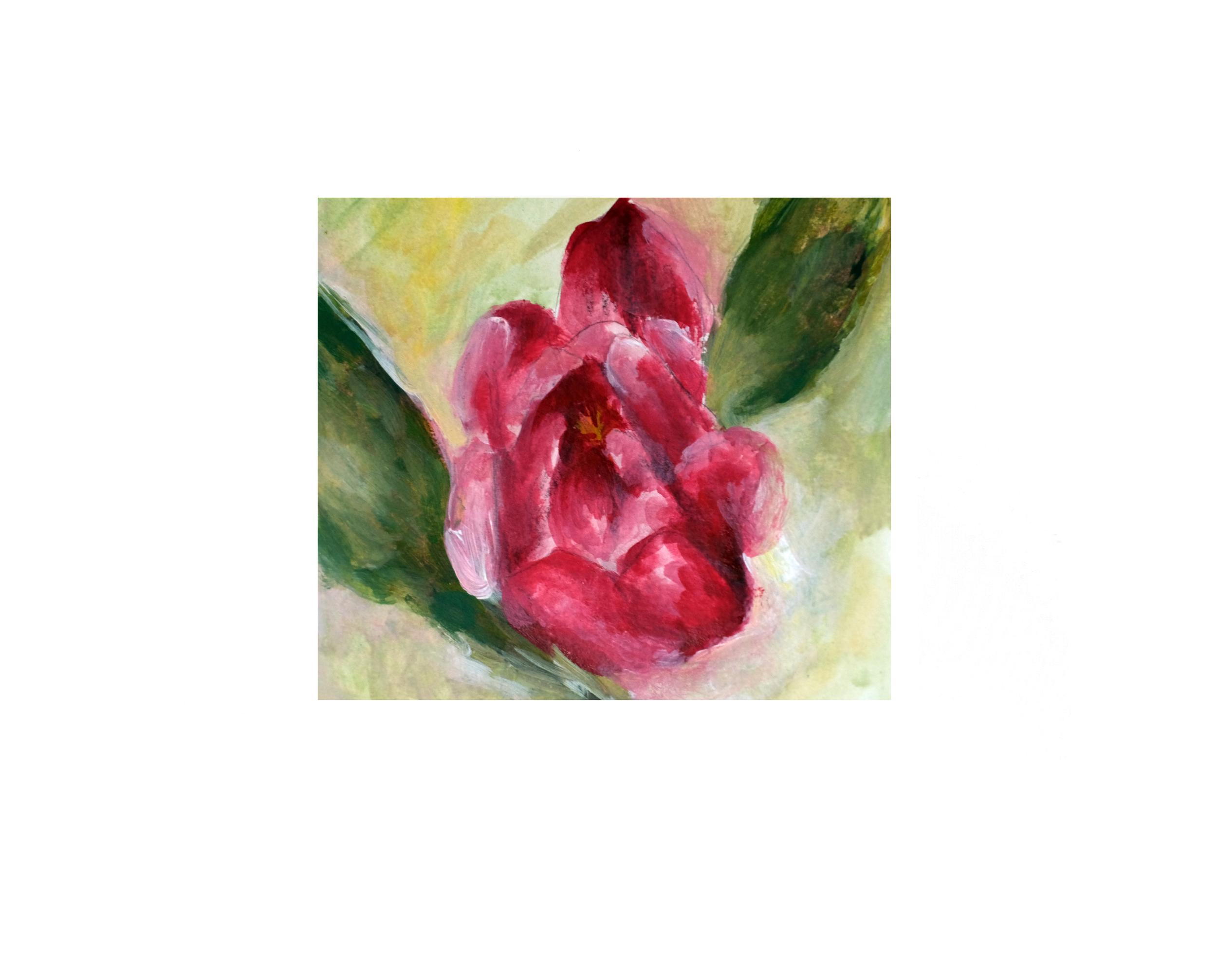 tulip1.png