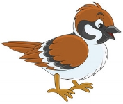 sparrow_bird.png