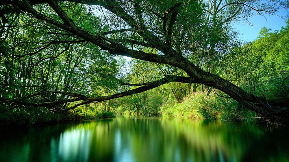 Amazon-Rainforest-Brazil.jpg