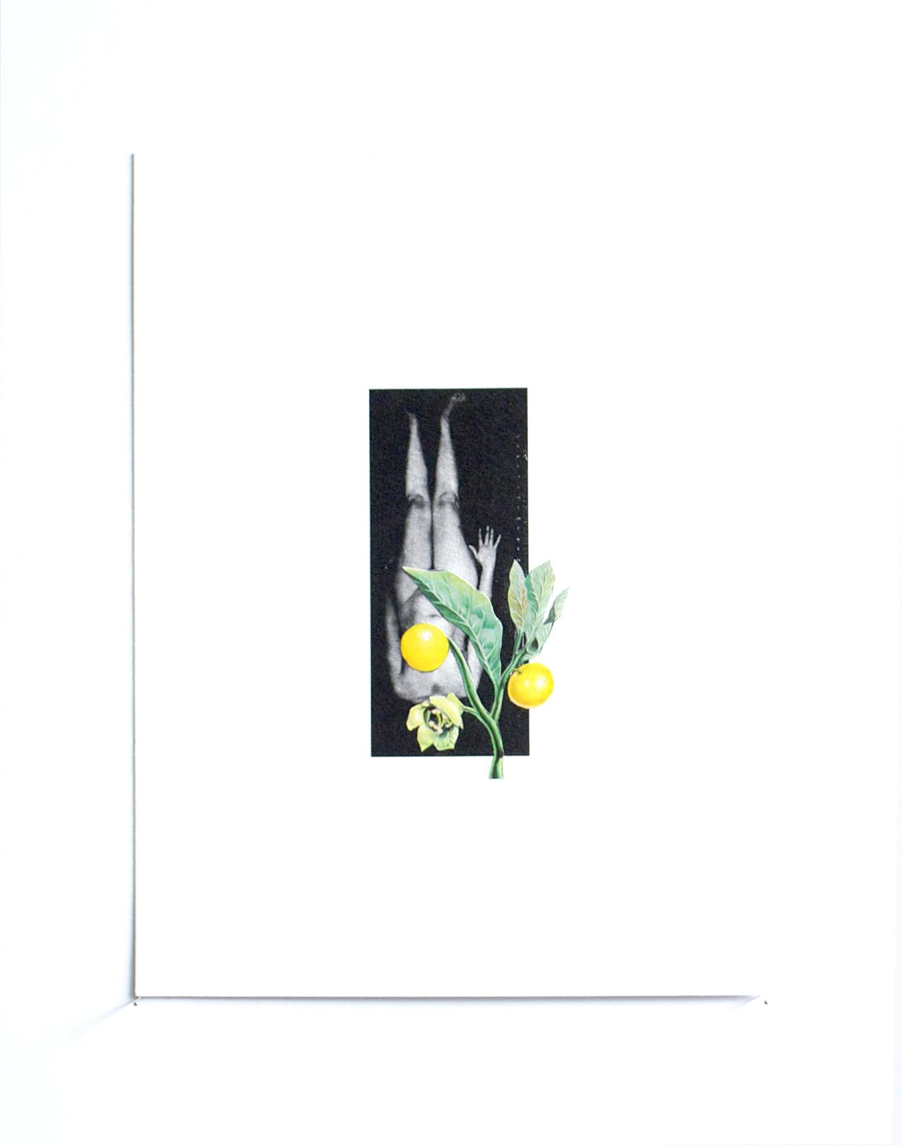 Belladona. 28.5 x 21.5 cm