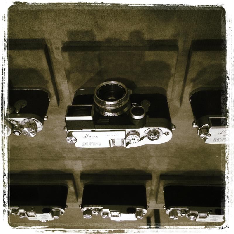 143 6302 GEH Leicas 7.5.jpg