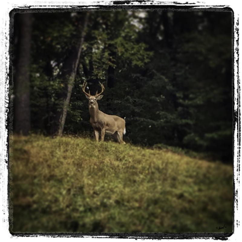 164 3684 Buck 7.5.jpg