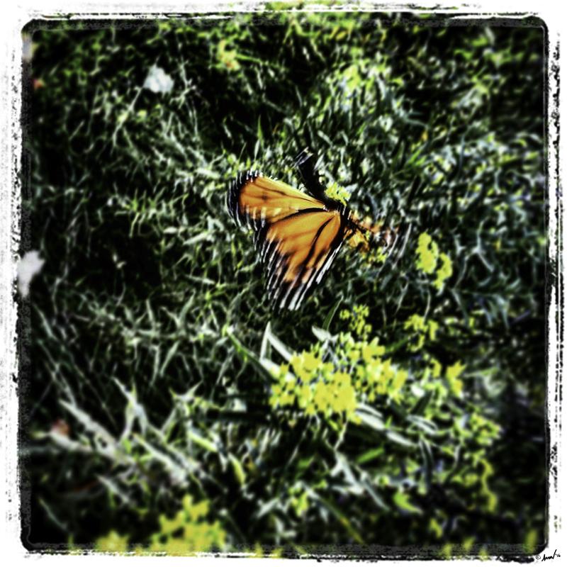 167 3661 Monarch 7.5.jpg