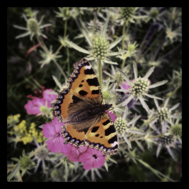 172 5374 Moth 7.5.jpg