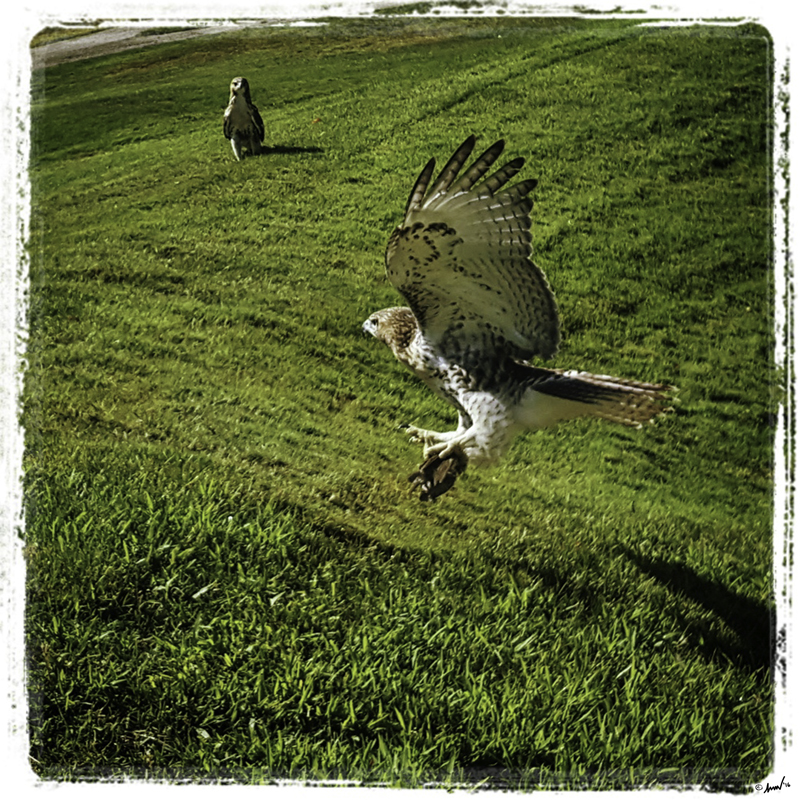 178 135314 Hawk 7.5.jpg