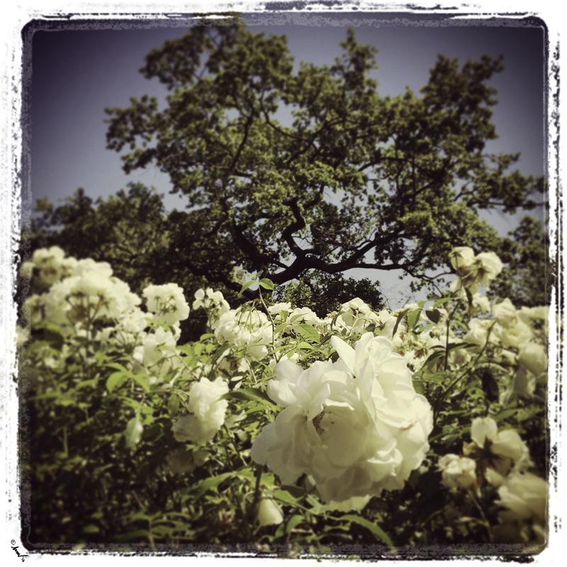5137 London Garden 7.5.jpg