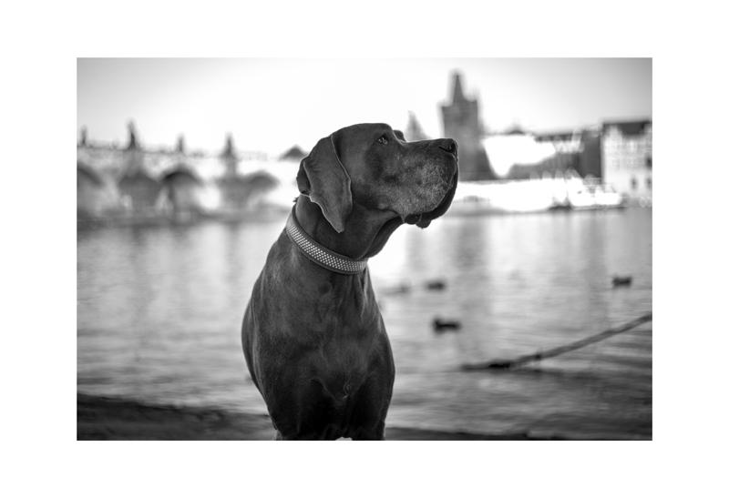 Mala Strana Big Dog.jpg