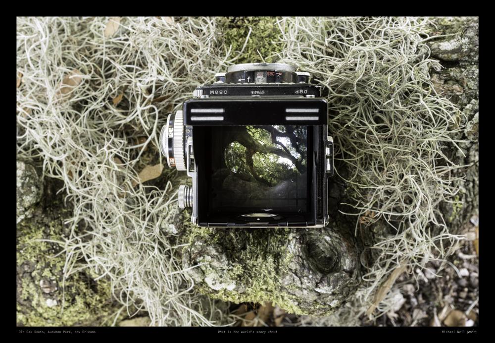 Old Oak Roots, Audubon Park flt.jpg