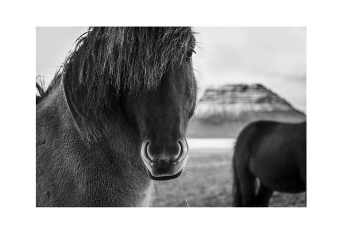 Iceland 19x13 print Horse shoe Iceland.jpg