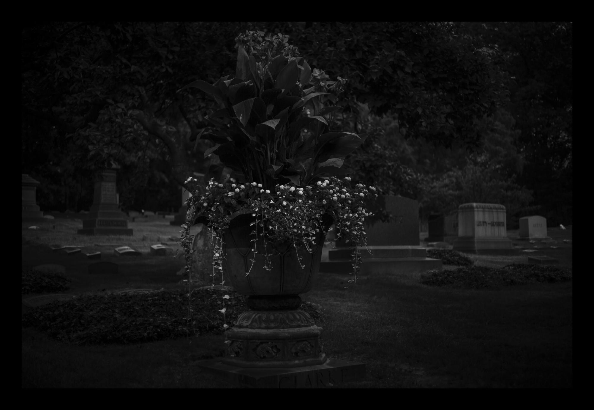 9N6A0964 Night Bouquet.jpg