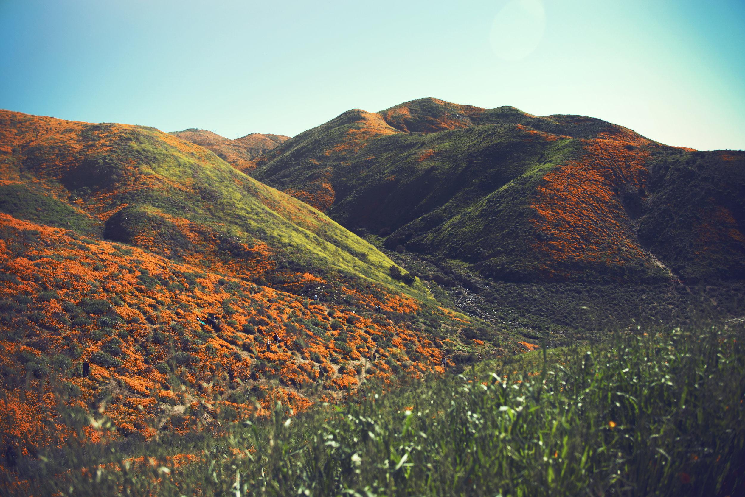 poppy_lake_elsinore_hills