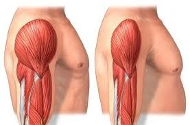 Muscles lose mass and strength as we age, changing appearance and posture.