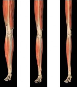 """As we age, we lose muscle mass, known as sarcopenia, or """"poverty of flesh."""""""