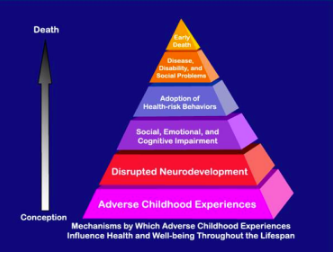 Mechanisms by which ace's influence health ....png
