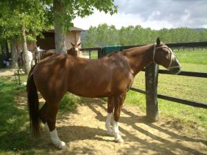 Gorgeous Il Borro ponies