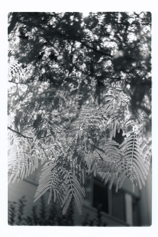 Untitled-2 copy.jpg
