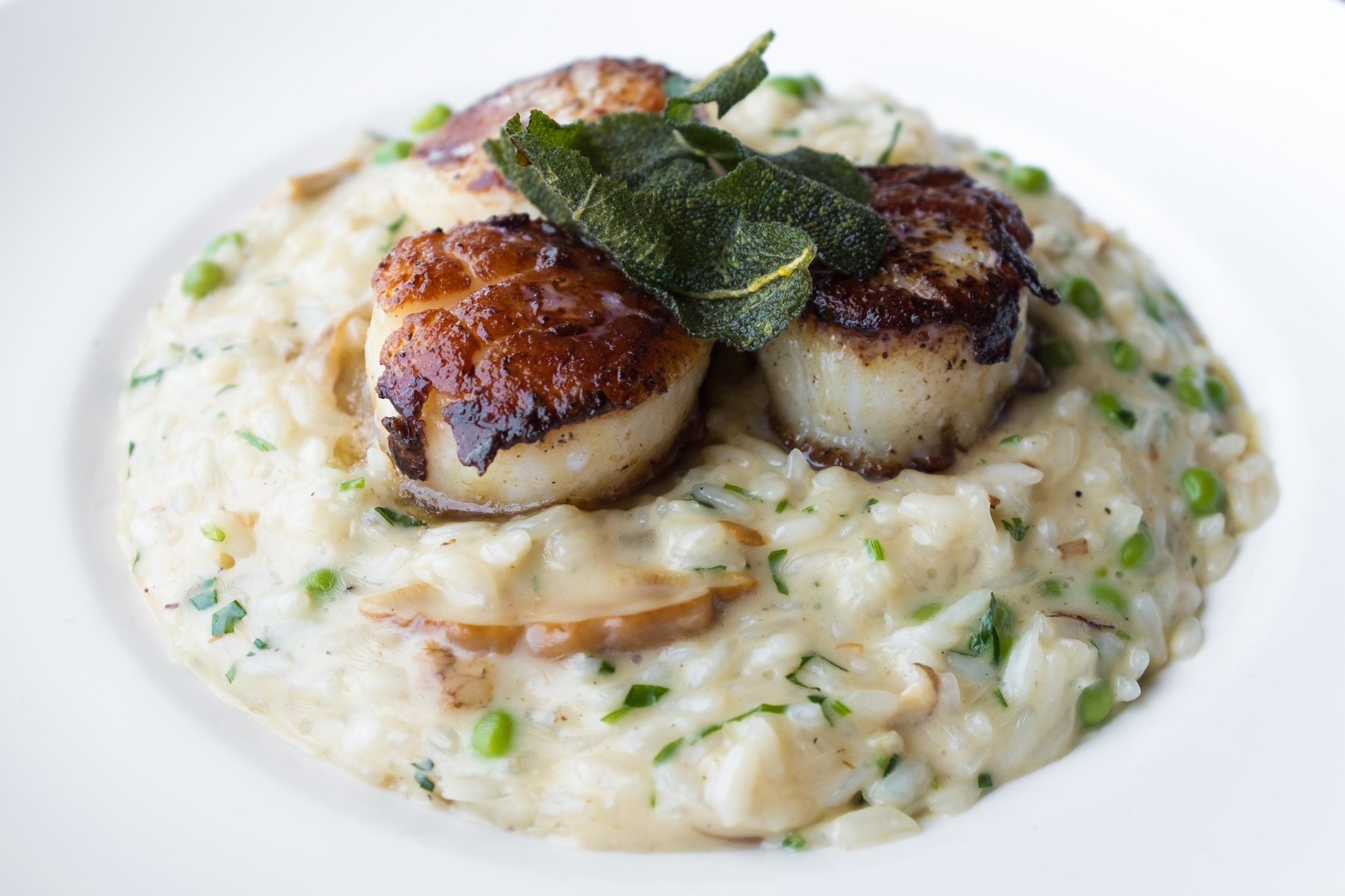 Roasted Dayboat Scallops atop Risotto