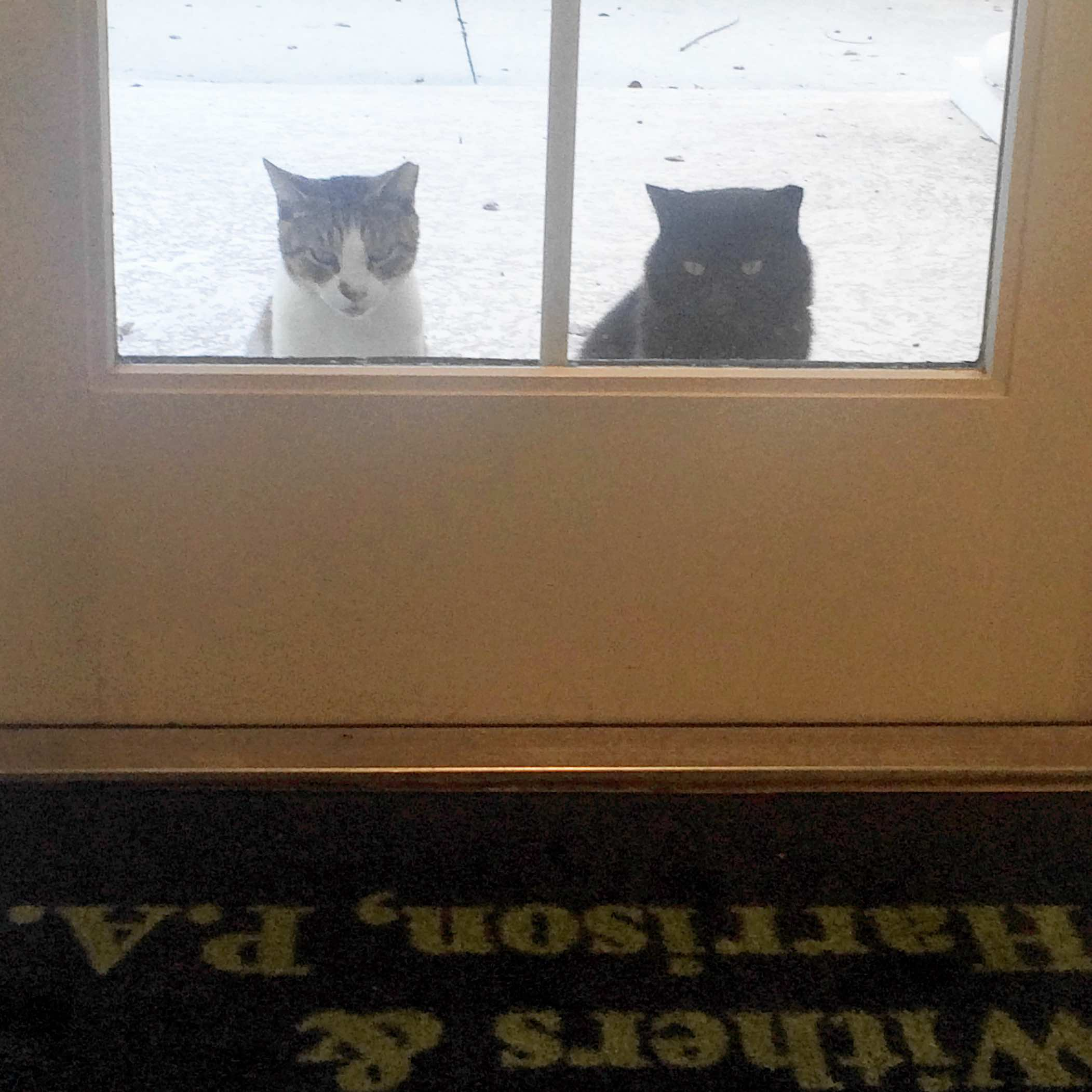 cats at door.jpg