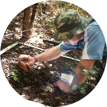 Understory Regeneration   Quadrants of both open & reforested areas are monitored for new species growth to measure which natives are germinating on their own, when maintenance can be scaled back & how geography, topography & planted species effect these results.