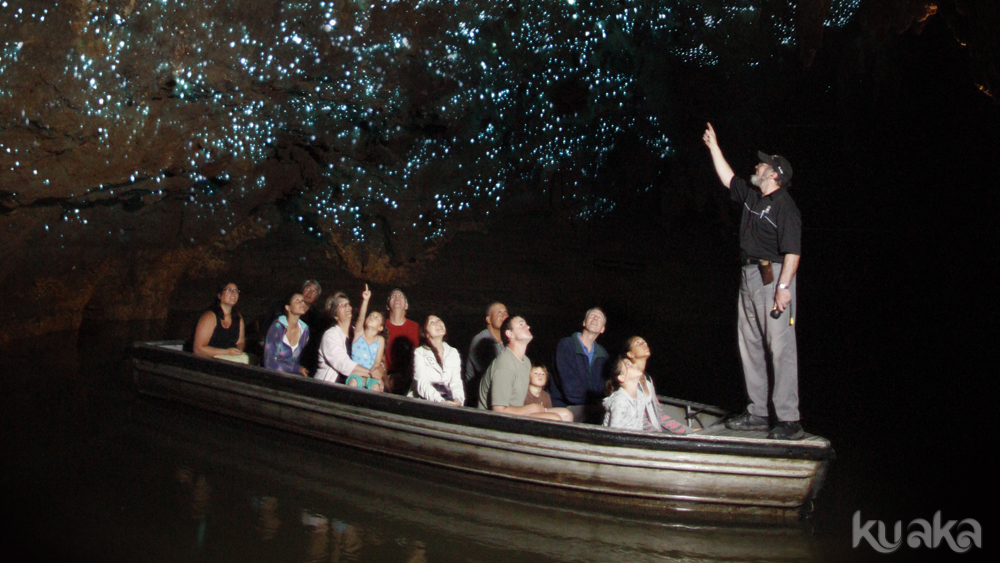 Take a boat ride through the glowworm grotto
