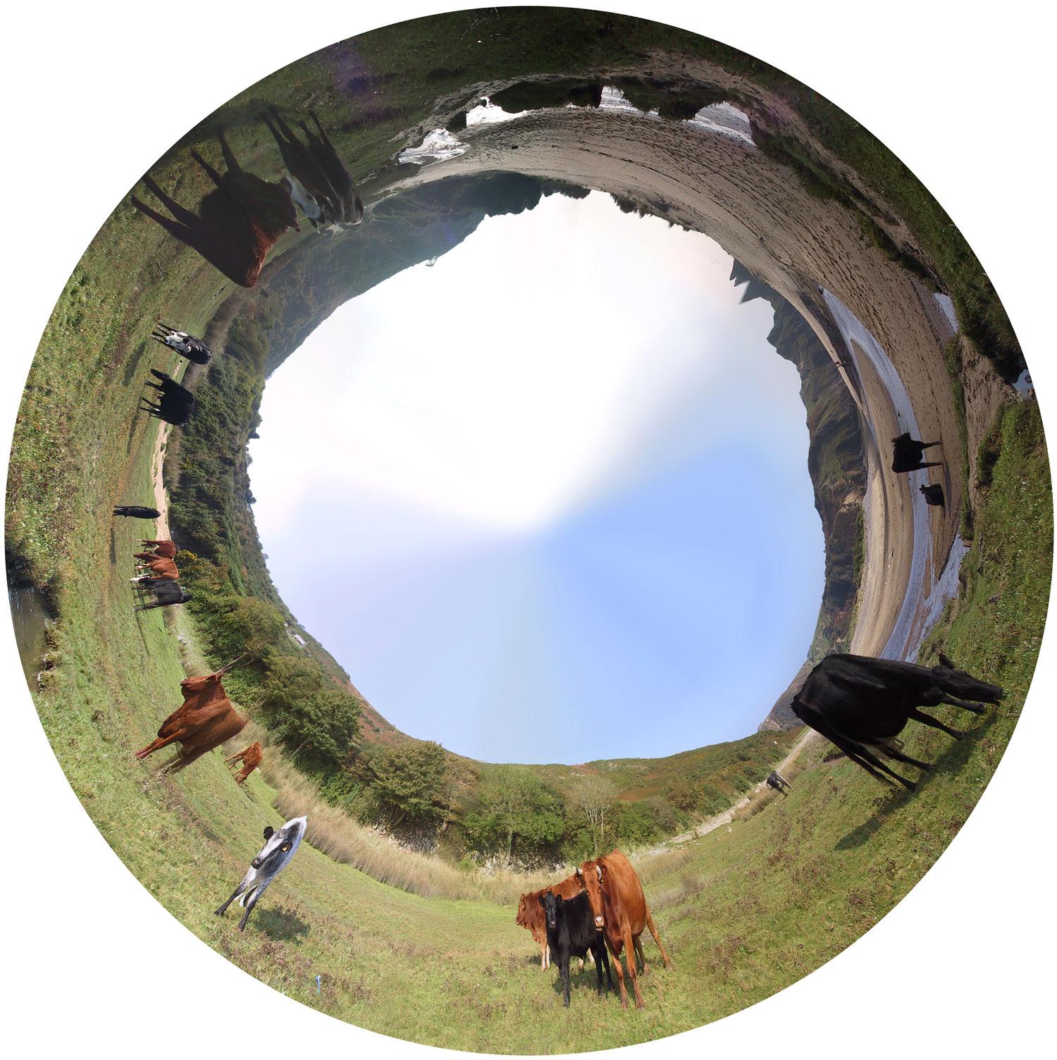 Wls-cows-1500.jpg