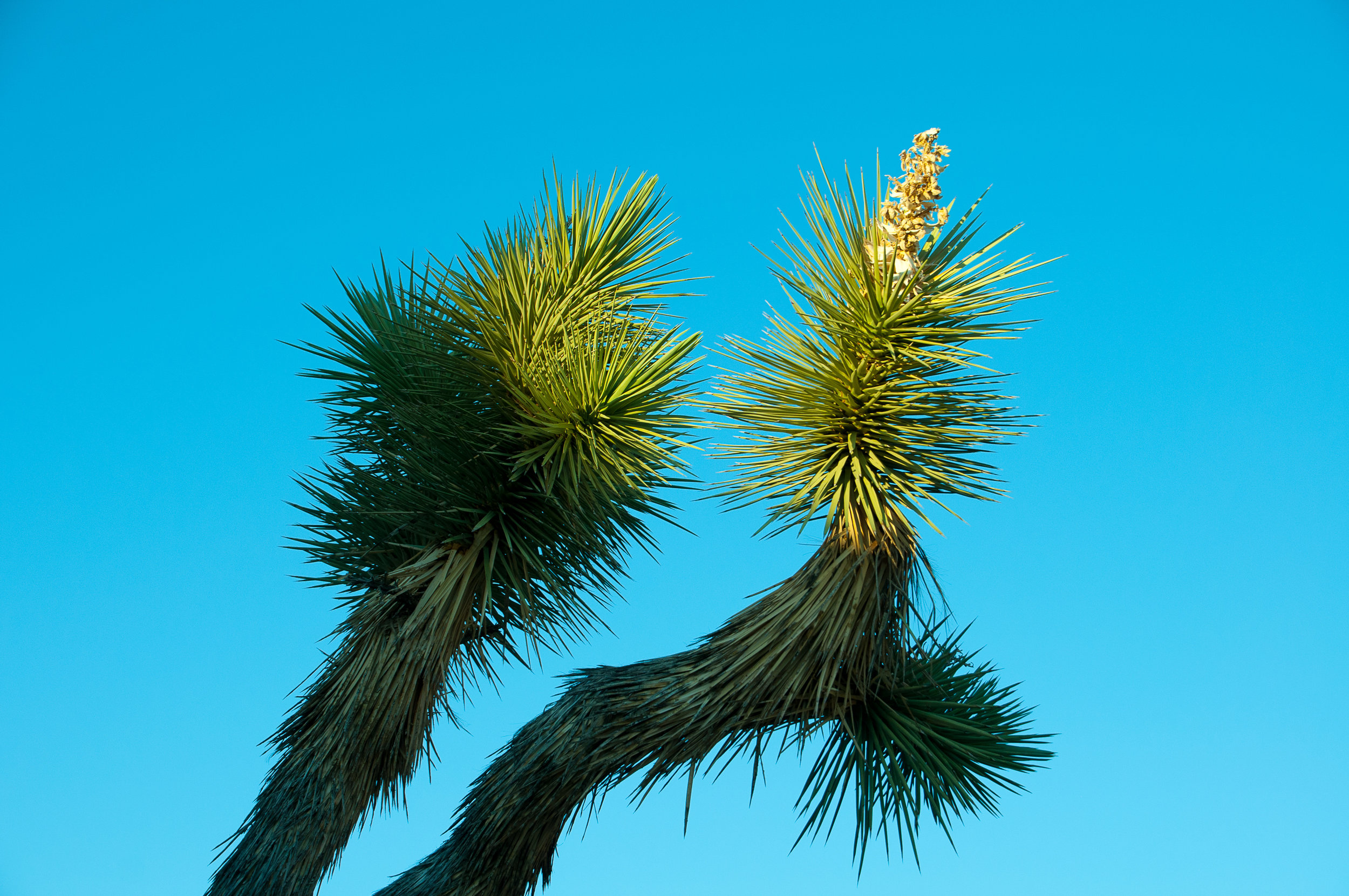 palm springs-joshua tree-7.jpg